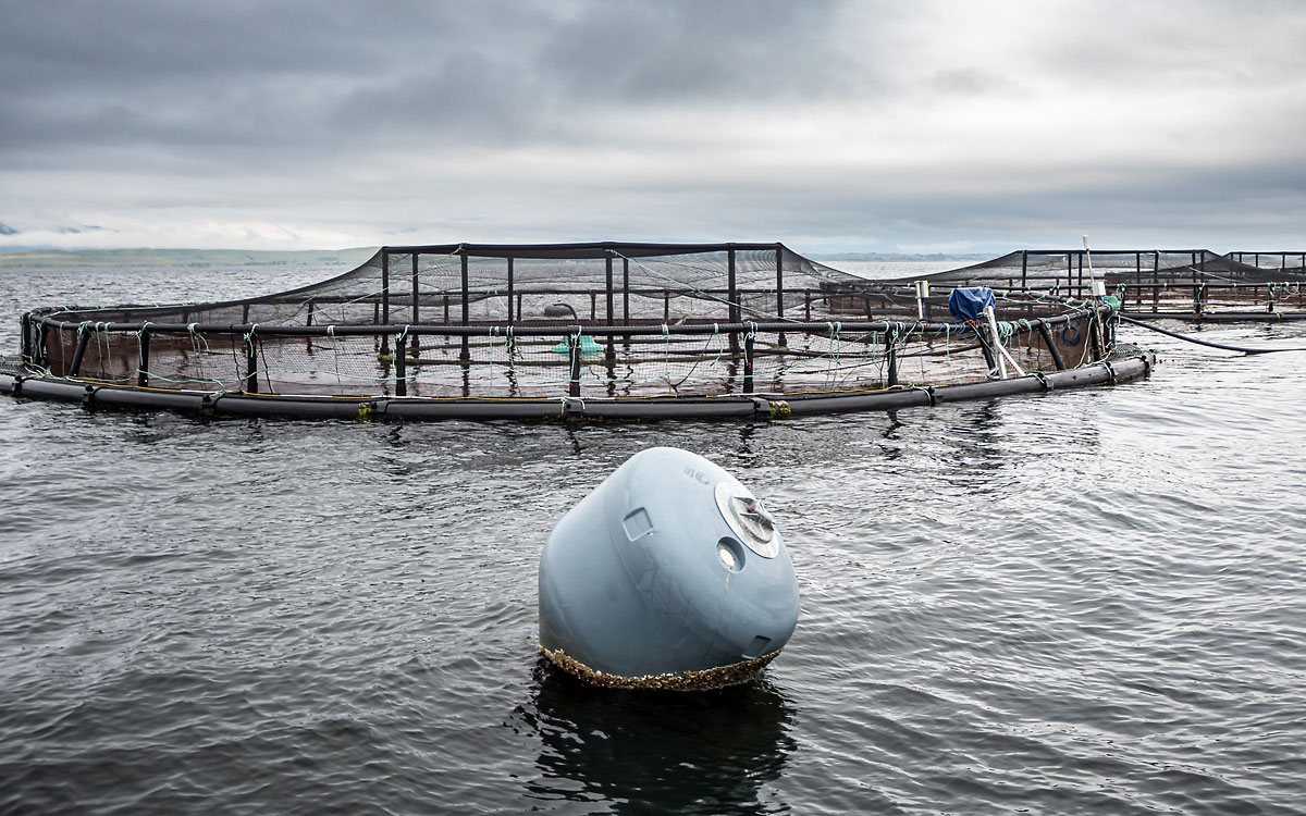 Élevage de saumons en Écosse
